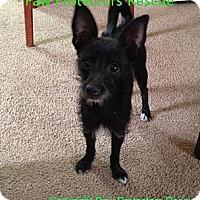 Adopt A Pet :: Bella - Oceanside, CA