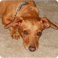 Adopt A Pet :: Buster Brown - Bryan, TX