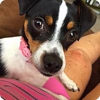 Adopt A Pet :: LOLA - Higley, AZ