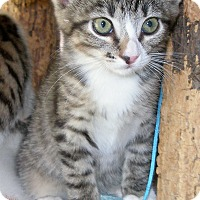 Adopt A Pet :: Eowyn - Union, KY