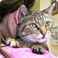 Adopt A Pet :: Merida - Toledo, OH