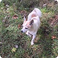 Adopt A Pet :: Spike - Hendersonville, TN