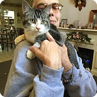 Adopt A Pet :: Stretch - McDonough, GA