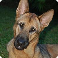 Adopt A Pet :: Max - Ormond Beach, FL