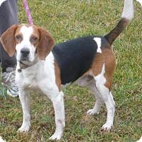 Adopt A Pet :: Blake - Dumfries, VA