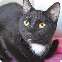 Adopt A Pet :: Journey - Sierra Vista, AZ