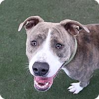 Adopt A Pet :: *HAMISH - Las Vegas, NV