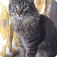 Adopt A Pet :: Kashi - Oakland, CA