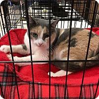 Adopt A Pet :: Colleen - Simpsonville, SC