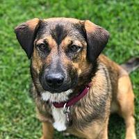 Adopt A Pet :: Brie - Hewitt, NJ