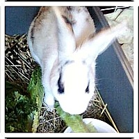 Adopt A Pet :: Curtis - Williston, FL