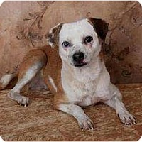 Adopt A Pet :: Lilly - Rochester, NY