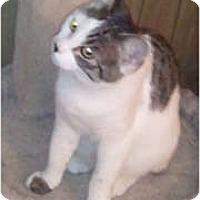 Adopt A Pet :: Kismet - Anchorage, AK