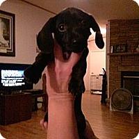 Adopt A Pet :: Ebony - Fort Valley, GA