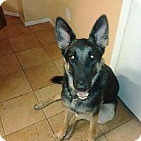 Adopt A Pet :: Jazmine - Green Cove Springs, FL