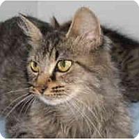 Adopt A Pet :: Emma - Arlington, VA