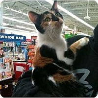 Adopt A Pet :: Bebe - Sterling Hgts, MI