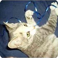 Adopt A Pet :: Lucy - Secaucus, NJ