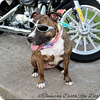 Adopt A Pet :: Xena - Mount Juliet, TN