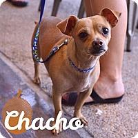 Adopt A Pet :: Chacho - San Antonio, TX