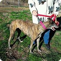 Adopt A Pet :: Craigie Missprim - Knoxville, TN