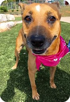 Shepherd (Unknown Type) Mix Dog for adoption in Greensboro, North Carolina - Susie