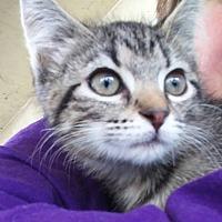 Adopt A Pet :: Isa - Clarkson, KY