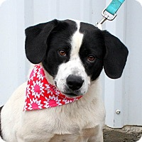 Adopt A Pet :: Precious in CT - Manchester, CT