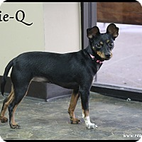 Adopt A Pet :: Suzie-Q - Rockwall, TX