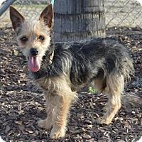Adopt A Pet :: Bagherra - Corona, CA
