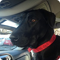 Adopt A Pet :: Ajax - Edisto Island, SC