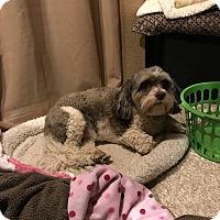 Adopt A Pet :: Sophie - Lafayette, CA