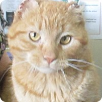 Adopt A Pet :: Anchor - Lloydminster, AB