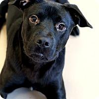 Adopt A Pet :: Ren *Petsmart GB* - Appleton, WI
