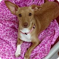 Adopt A Pet :: Cassie - Burgaw, NC