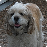 Adopt A Pet :: Sandra Dee - Sugarland, TX