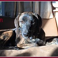 Adopt A Pet :: Fawn - Elburn, IL