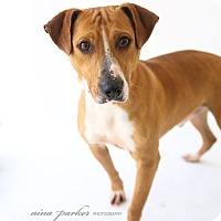 Adopt A Pet :: JonJon - Marietta, GA