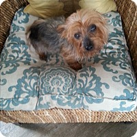 Adopt A Pet :: Trixie - Dothan, AL