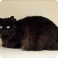 Adopt A Pet :: Ziggy - Midland, TX