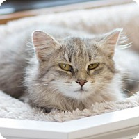 Adopt A Pet :: Daisy May - Fargo, ND