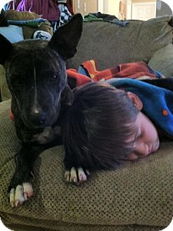 Bull Terrier/Terrier (Unknown Type, Medium) Mix Dog for adoption in Wytheville, Virginia - Pollywog the Snugglebug