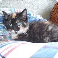 Adopt A Pet :: Jenna - Morris, PA