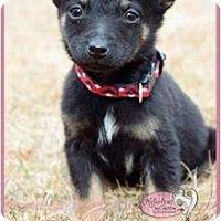 Adopt A Pet :: Miso - Haverhill, MA