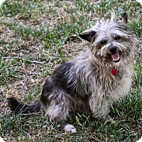 Adopt A Pet :: Chewy - Winters, CA