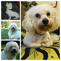 Adopt A Pet :: Luna - ROME, NY