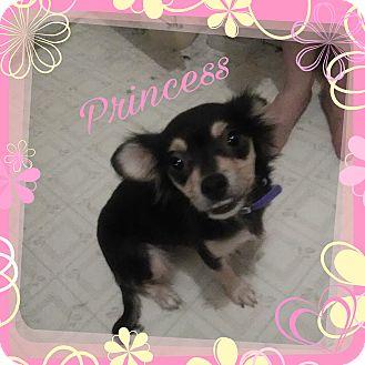 Chihuahua Mix Dog for adoption in Walker, Louisiana - Princess