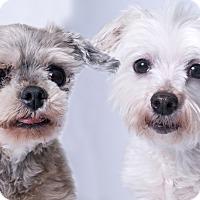 Adopt A Pet :: Gilda & Glenn - Chicago, IL