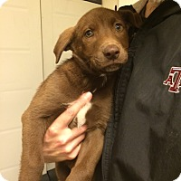 Adopt A Pet :: Farley - Fair Oaks Ranch, TX