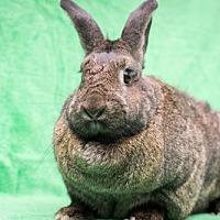 Adopt A Pet :: Winter & Summer - Baton Rouge, LA